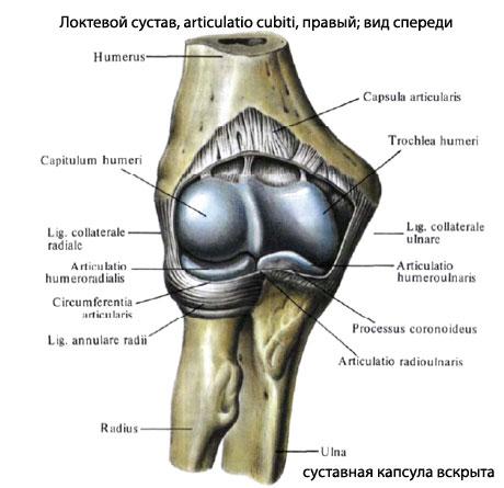 Локтевой сустав фото бурсит плечевого сустава