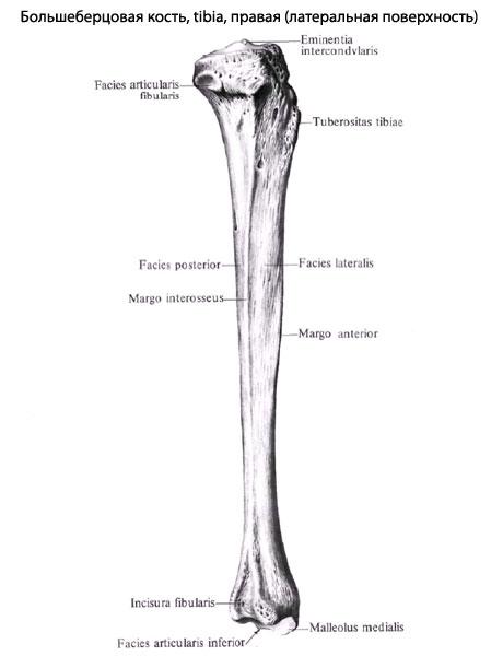 Иногда большеберцовая кость