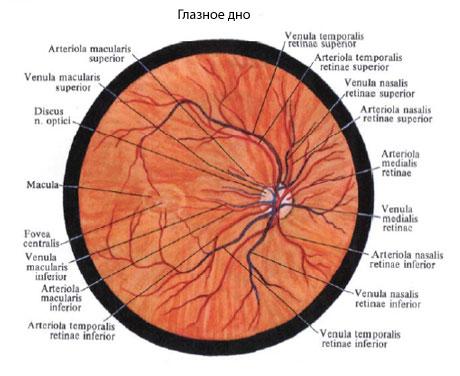 изображение на сетчатке глаза: