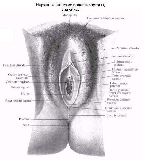 Отверстие влагалища прикрыто у девственниц virgo intacta складкой