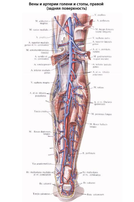 Инвалидность при тромбозе глубоких вен нижних конечностей