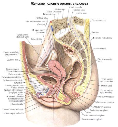 Передняя и задняя стенки