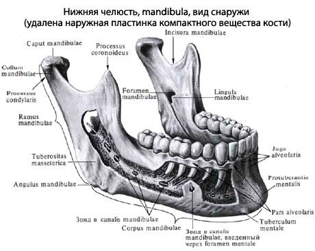 Тройничный нерв лица анатомия и строение тройничного