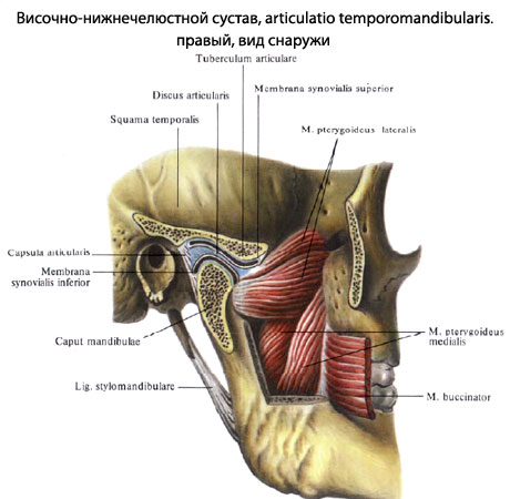 Артроз нижнечелюстного сустава гомеоп врач специалист по костям и суставам
