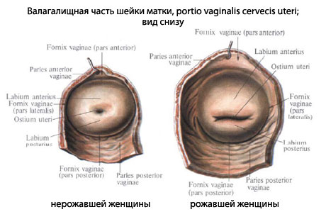 Вид влагалища рожавшей женщины фото фото 277-538
