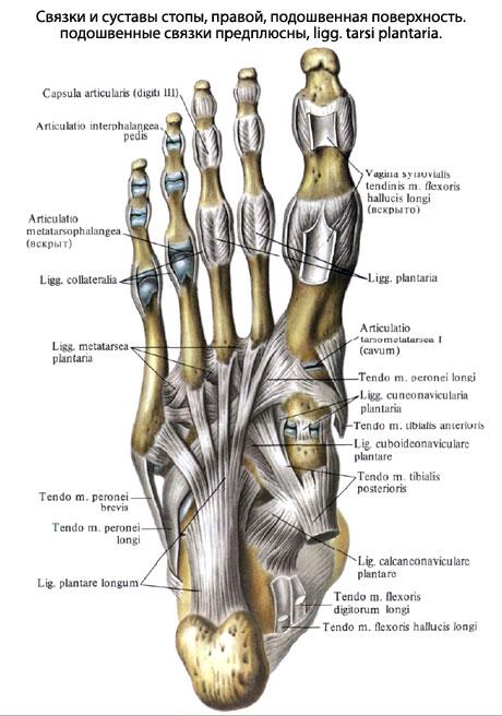 Сустав стопа боль в тазобедренном суставе отдающая в ногу