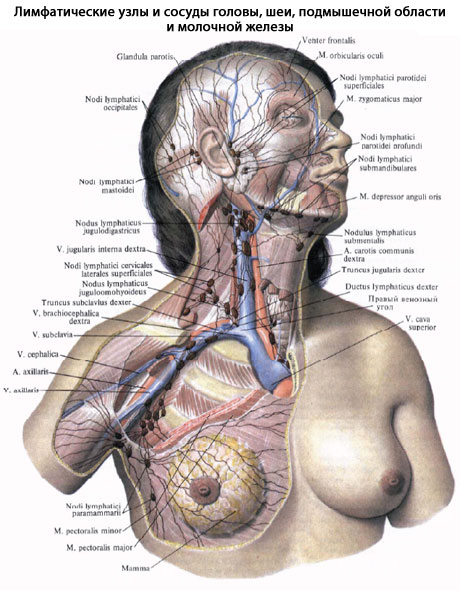 фото женской груди в лифчике