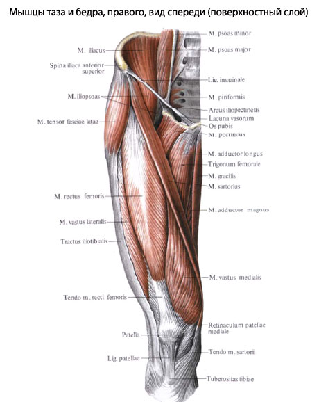 На задней поверхности ноги