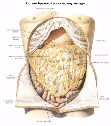 анализы для определения паразитов в организме человека