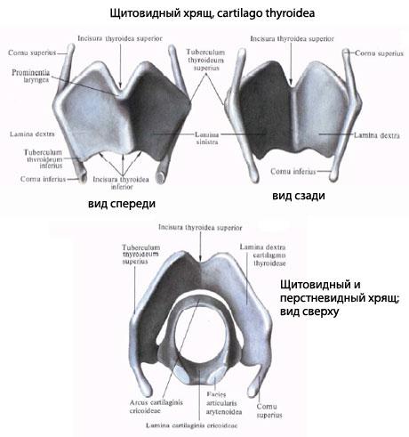 Посттравматическая болезнь спинного мозга