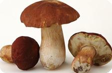 Грибы. Отравление грибами.