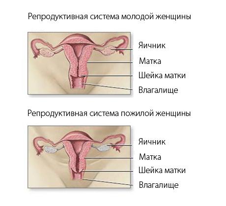 Какой аборт делать? Виды абортов, EUROLAB, Гинекология