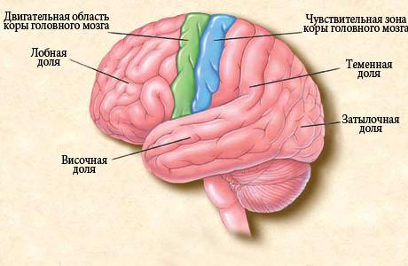 затылочная эпилепсия у детей