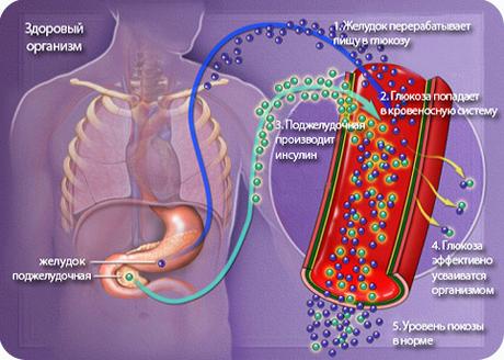 Здоровый организм, без сахарного диабета
