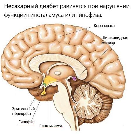 http://www.eurolab.ua/img/news/11_2013/1diabetist_.jpg