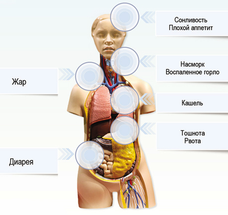 Суставные и мышечные боли при гриппе гимнастика при артрозах тазобедренного сустава видео