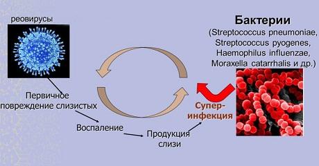 Реовирус у детей