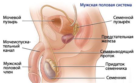 Репродуктивная система человека заболевания