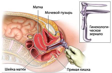 Вагина глазами гинеколога 1 фотография