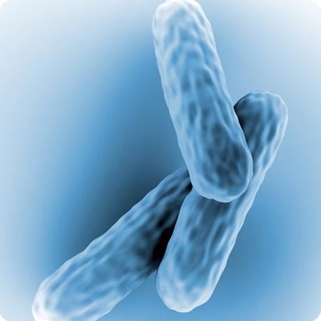 Микобактерия туберкулеза