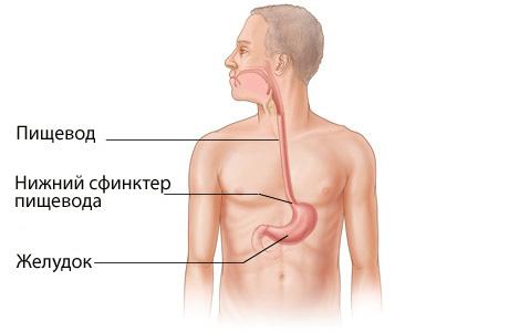 Рародное лечение гастроэзофагеальной рефлюксной болезни история и медицина древней индии