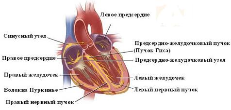 Сексуальная жизнь при аритмии сердца