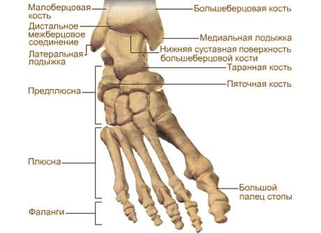 noga.jpg