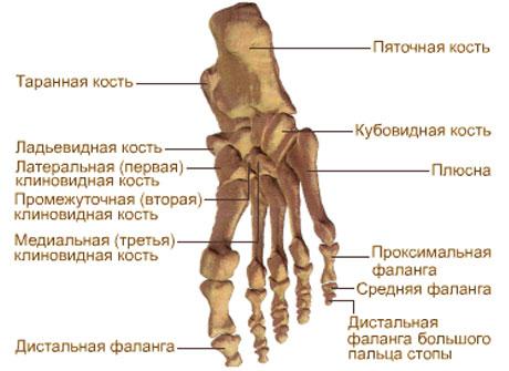 Косточки на ногах как вылечить народными средствами