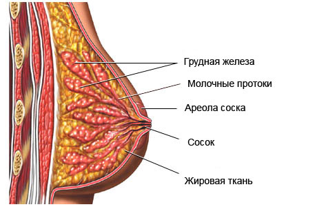 Фиброзно-кистозная мастопатия кисты обеих молочных желез