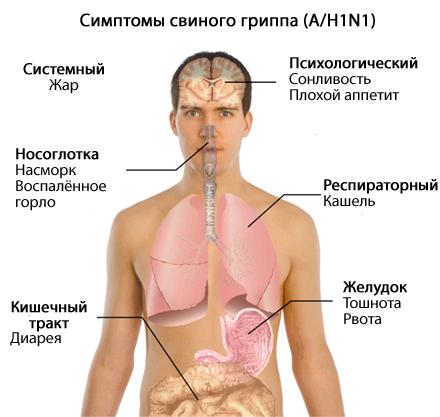 Свиной грипп A/H1N1