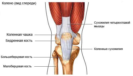 Реферат повреждение коленного сустава области височно нижнечелюстного сустава