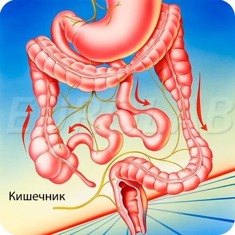таблетки от кишечных паразитов широкого спектра