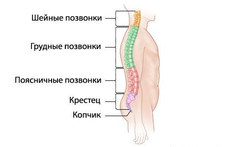 Passion.ru :: 3-я неделя беременности