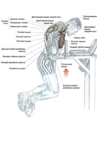В конце тренировки обезательно зделайте упражнение на пресс!  1. Жим гантелей сидя ( 2х5 - новичок, 3х15...