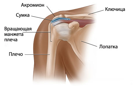 Структура плеча