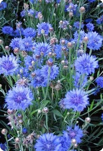 """Интернет-магазин комнатных растений  """"Мильтония """" предлагает экзотические растения."""